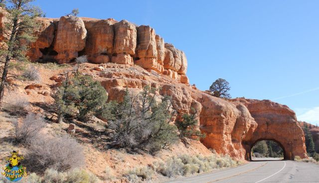 I think Red Canyon should be renamed, Orange Canyon!